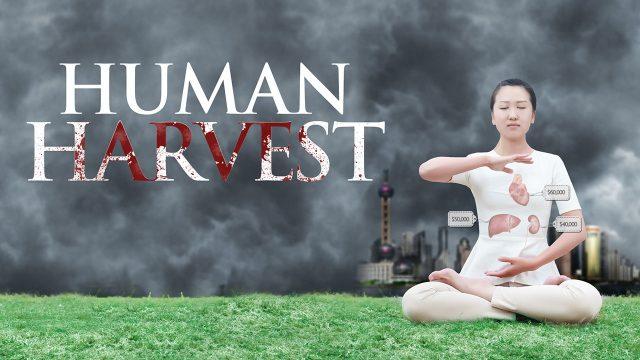 Human-Harvest, Falun Gong, les prélèvements forcés et illégaux d'organes